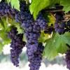 Sedona Wine Tasting Tours